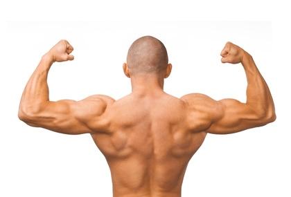 Muskeln des Rückens