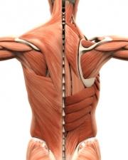 Faszien können verkleben und Rückenschmerzen verursachen