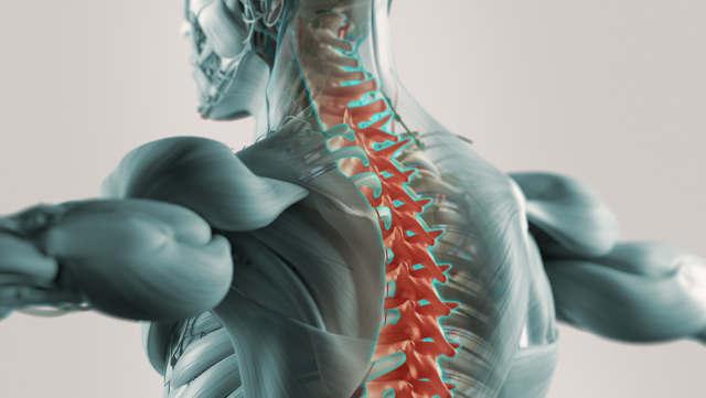 Rückenanatomie kennenlernen hilft Rückenbeschwerden zu vermeiden